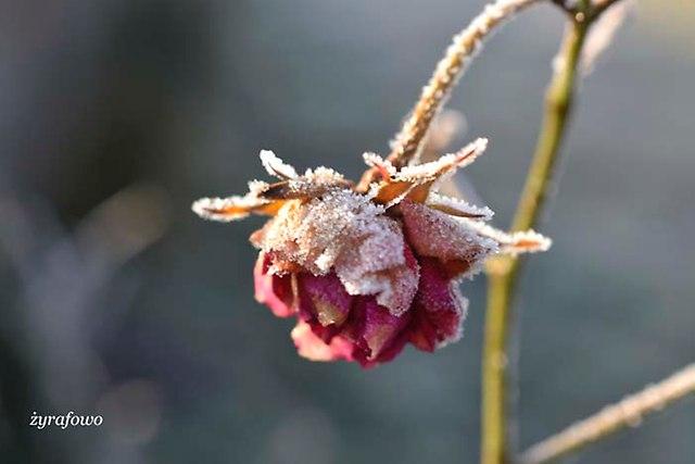 zima 2014_16