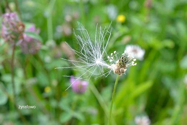 kwiaty 2012_27