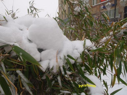 zima 2010_22