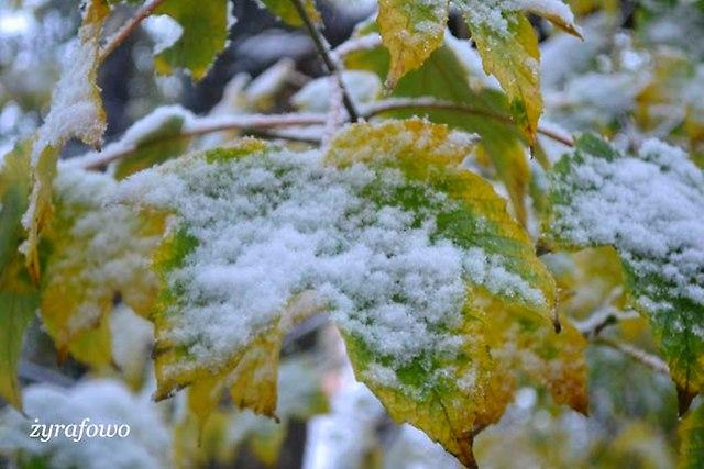 jesien 2012_183