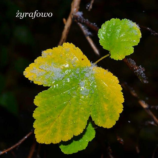 jesien 2012_173