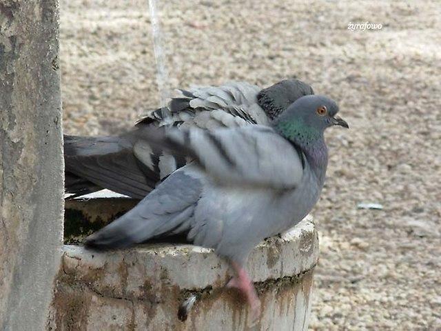 ptaki_67