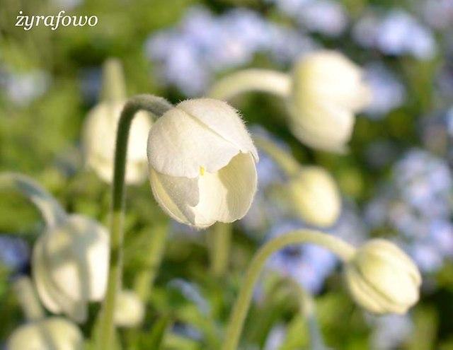 wiosna 2013_107