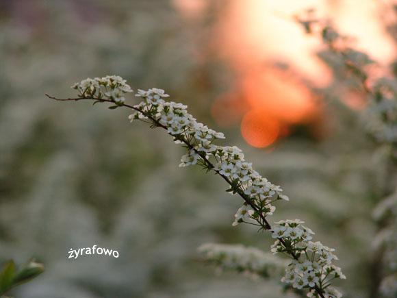 wiosna 2011_64