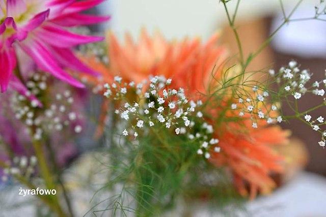 kwiaty 2012_14