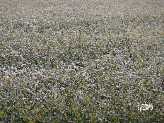 majowka 2011_09
