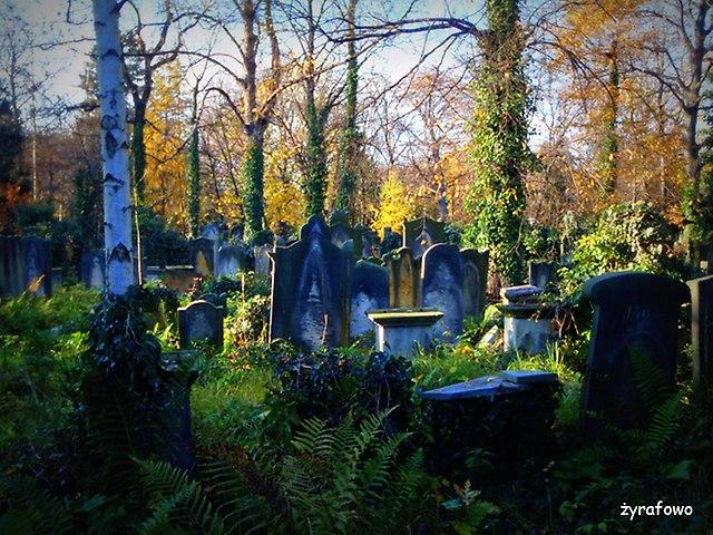 Cmentarz Zydowski_31