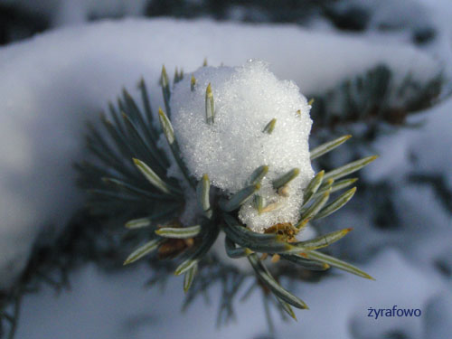 zima 01
