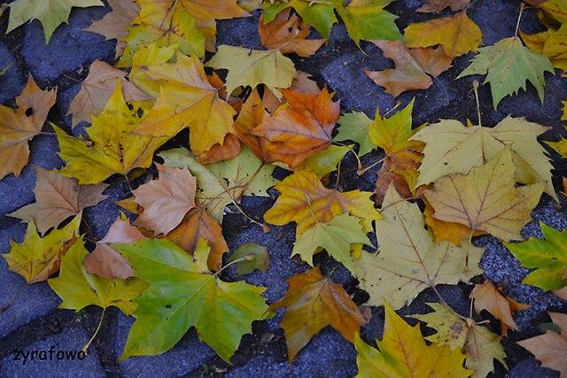 jesien 2014_19