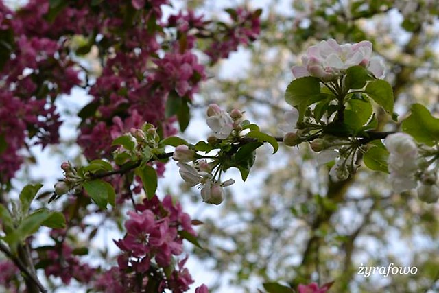wiosna 2014_113