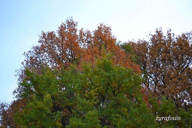 jesien 2012_217