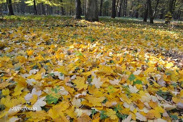 jesien 2012_61