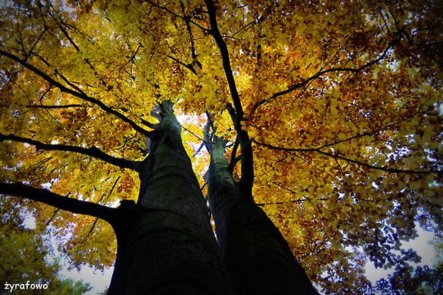 jesien 2015_62