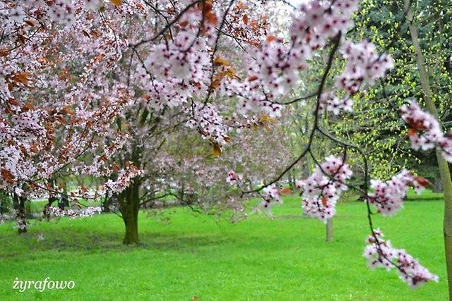 wiosna 2013_49