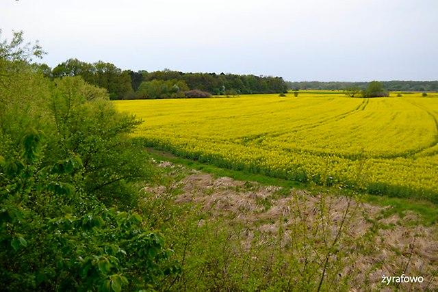 wiosna 2015_17