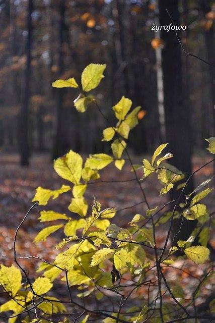 jesien 2012_274