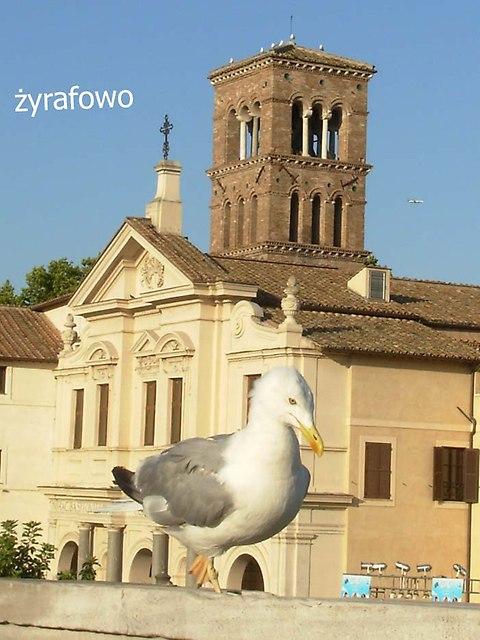 ptaki_13