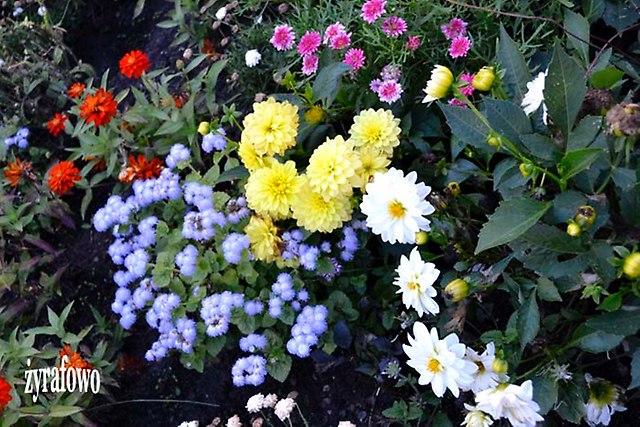 kwiaty 2012_30