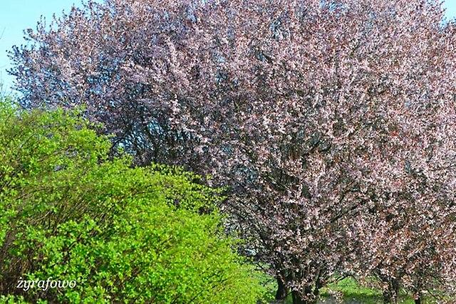 wiosna 2014_27