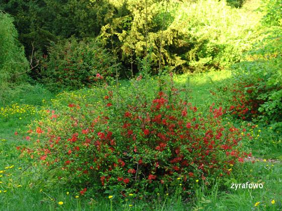 wiosna 2011_73