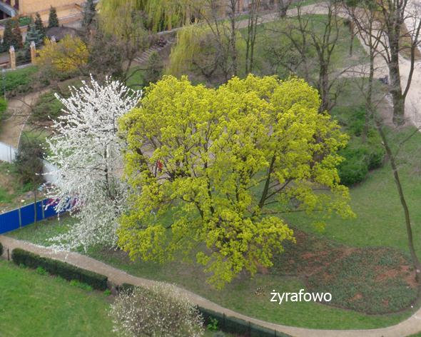 wiosna 2012_52