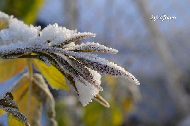 zima_23