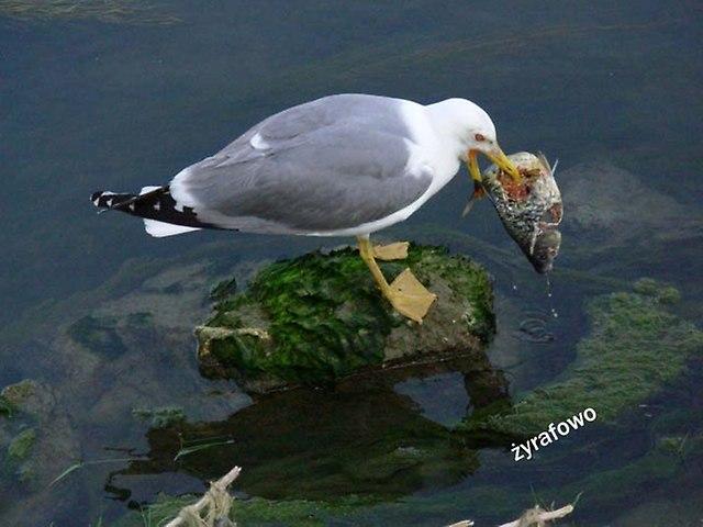 ptaki_54