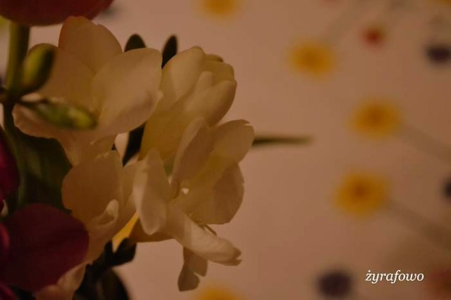 kwiaty 2014_17