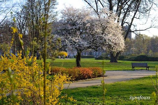 wiosna 2014_14