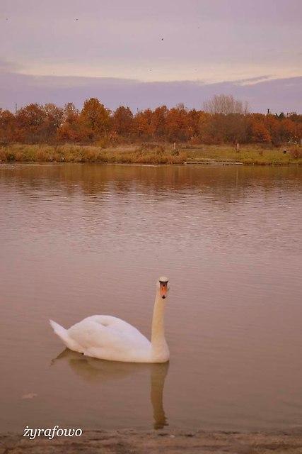 jesien 2012_240