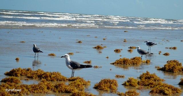 Padre Island 2014_13