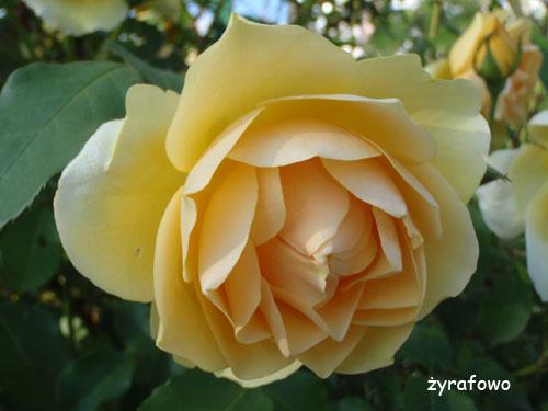 kwiaty_42