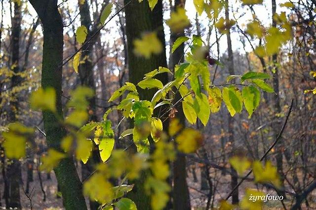 jesien 2012_275
