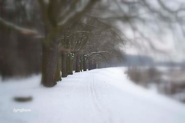 zima 2013_07
