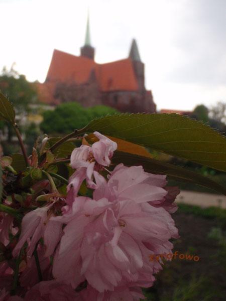 wiosna 2010_23