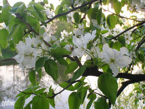 wiosna 2011_71