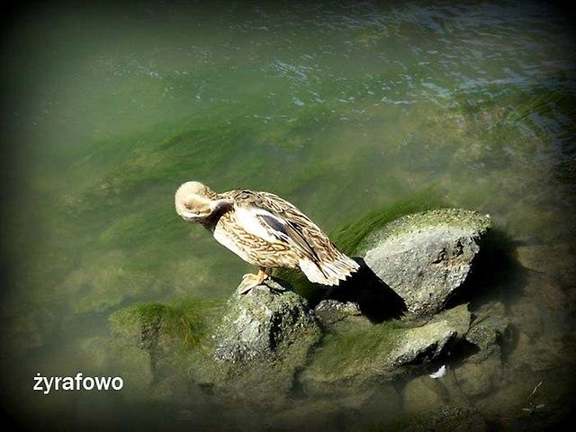 ptaki_51