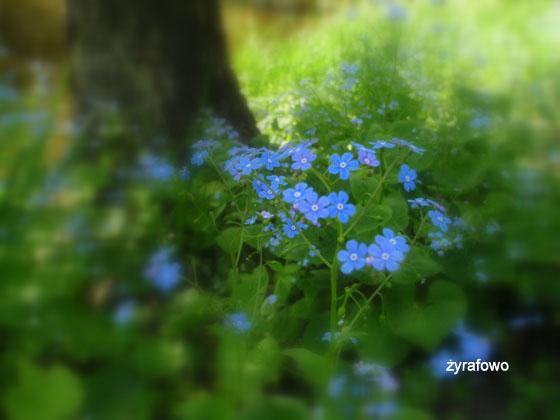 wiosna 2011_81