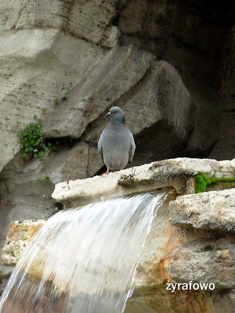 ptaki_47