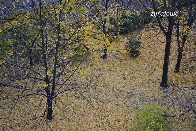 jesien 2012_130