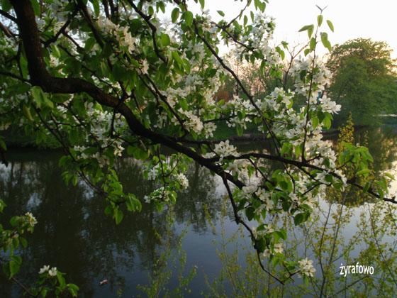 wiosna 2011_69