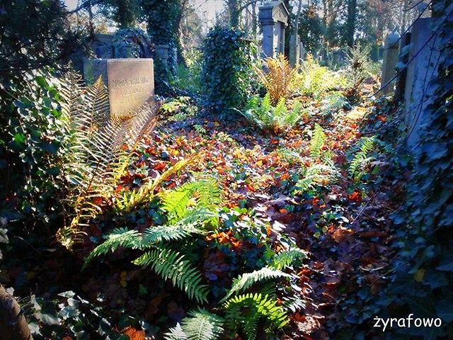 Cmentarz Zydowski_34