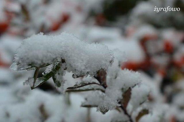 jesien 2012_117