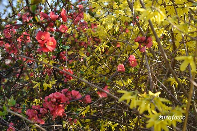 wiosna 2014_49