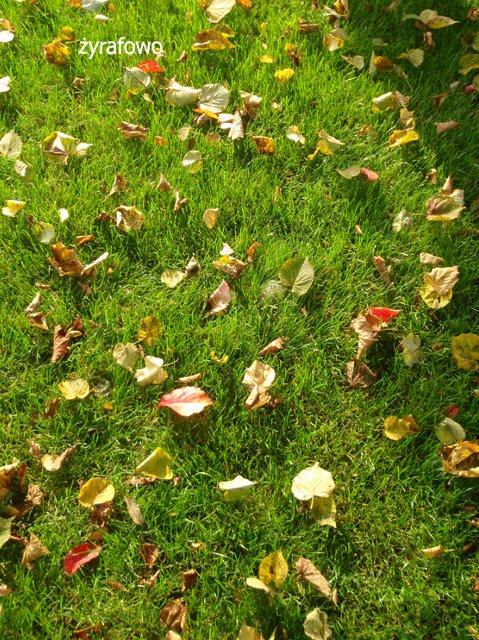 jesien 2011_09