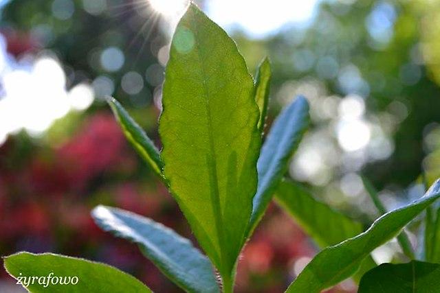 Ogrod Botaniczny_03