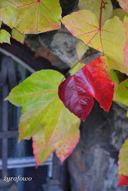 jesien 2013_124