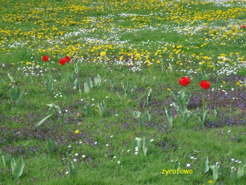 wiosna 2010_17