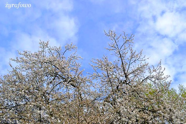 wiosna 2013_45