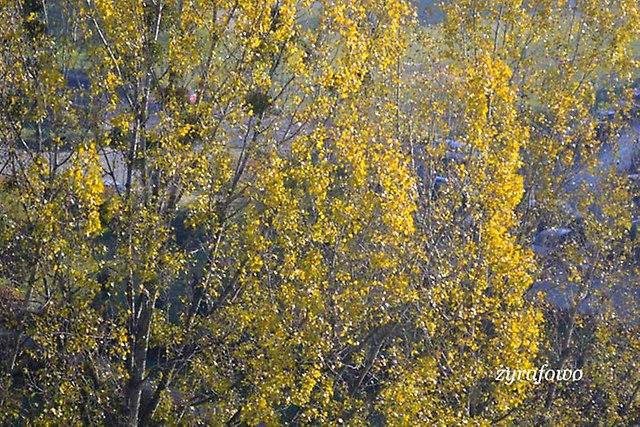 jesien 2012_134